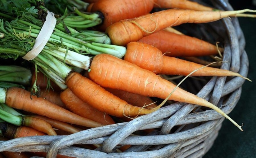 Carrot Root